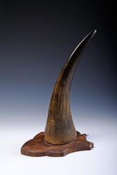 A RHINOCEROS HORN