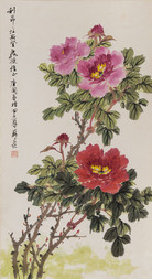BLOSSOMING PEONIES